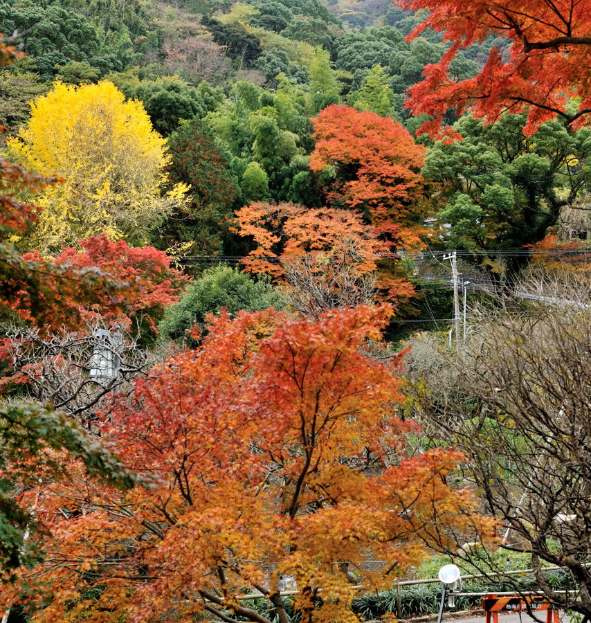 Atami_ike_03