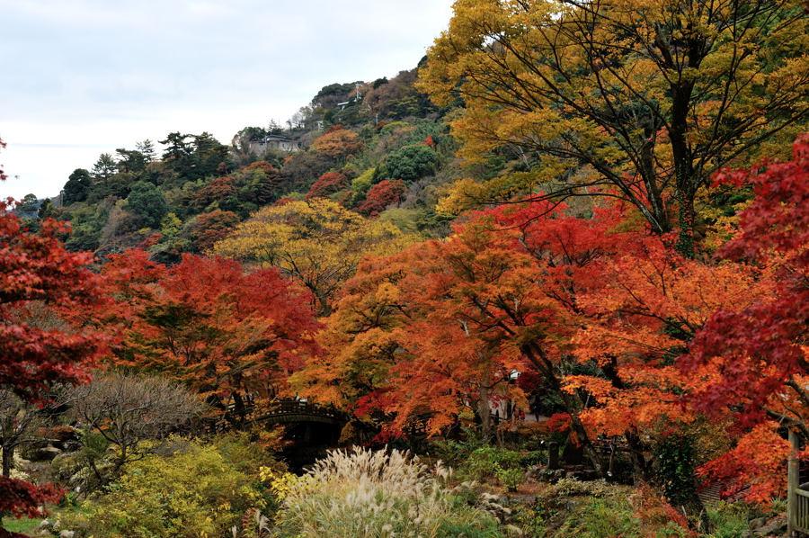 Atami_ike_06